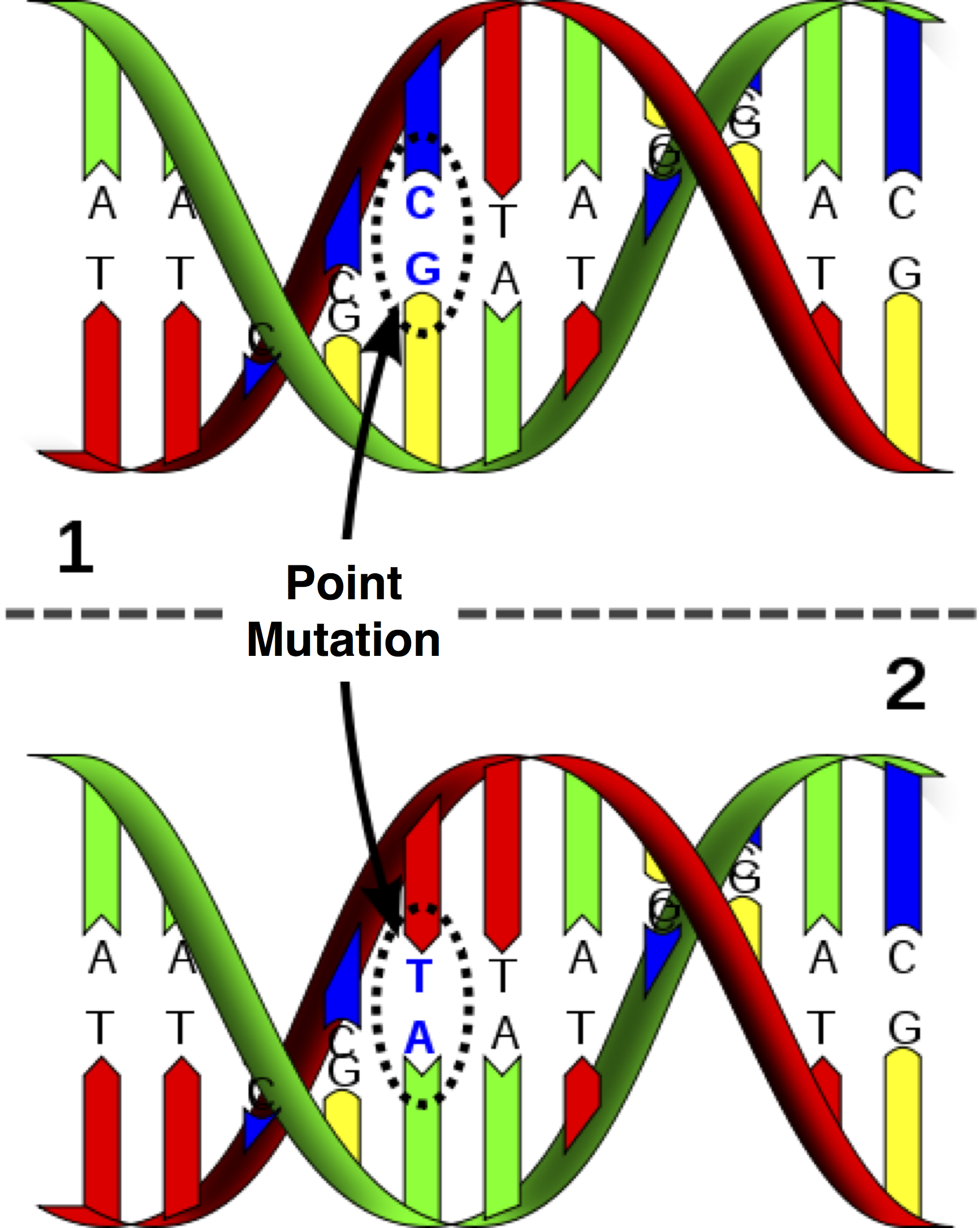 ROSALIND | Counting Point Mutations